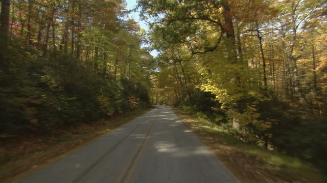 Car point of view driving through the beautiful autumn foliage of a thick woodland.