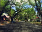 Car point of view suburban street lined with oak trees / Houston, Texas