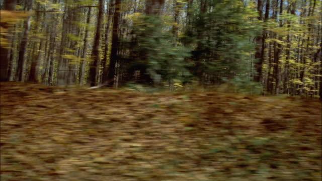 SIDE POV, Car riding through Allegheny National Forest, Pennsylvania, USA