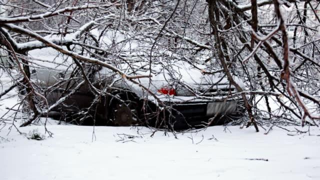 Car under fallen tree in winter