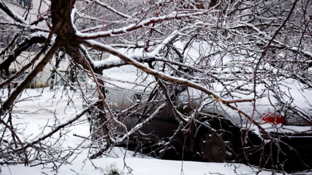 Car under fallen tree in winter