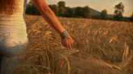 HD: Caressing The Wheat