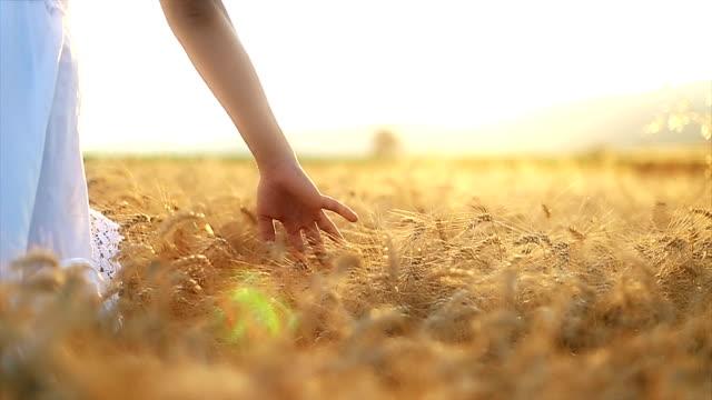 Liebkosung Weizen Pflanzen