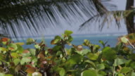 Caribbean Sea, Belize beauty shot