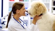 Caring female veterinarian talks sweetly to dog during examination