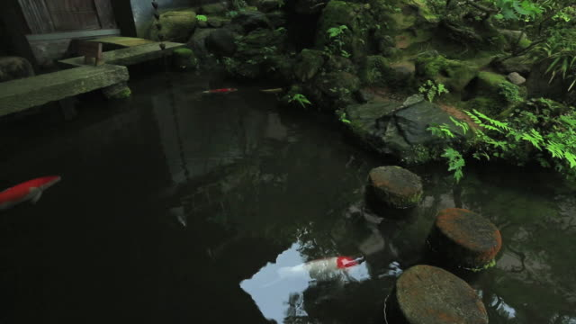 MS PAN Carp in small pond of wooden old house for samurai / Kanazawa, Ishikawa, Japan