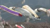 Carp streamers (koi nobori) along Aikawa River blow in breeze