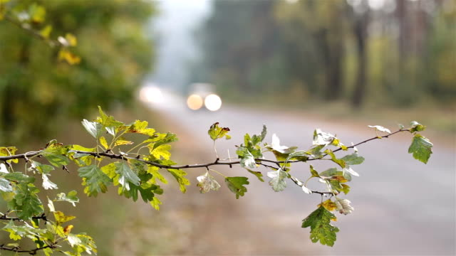 Cars drive on the road in the autumn forest.
