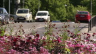 Cars moving behind pink flowers, Sweden.