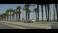 1966 WS PAN Cars on palm lined avenue