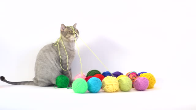 cat and colored wool skein in laundry basket