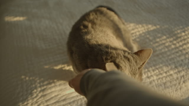 Cat Animals Happy gray cat pov petting hand