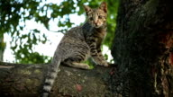 Cat Behavior, walk on the tree and sharpening claws