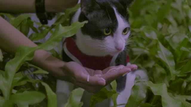 Katze essen Hairball einfügen