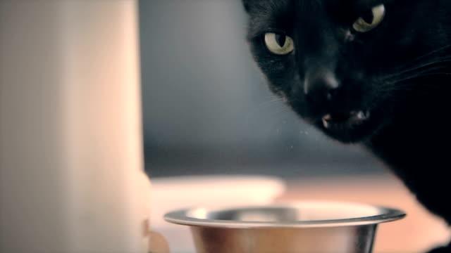 Cat eating,close up