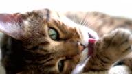 4K Cat Grooming