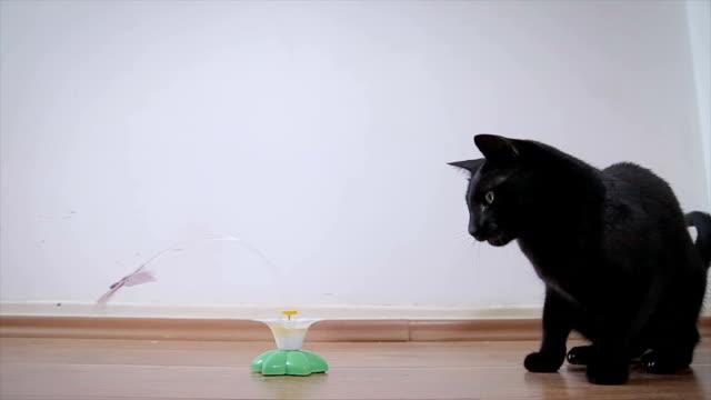 Katzen haben ein neues Spielzeug