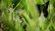 Cat in grass looking around
