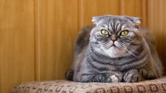 Katze liegt auf einem bequemen Sessel.