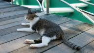 Katze, die auf der Suche nach etwas
