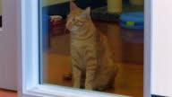 Gatto guardando attraverso il vetro