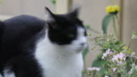 Cat lying outdoors closeup, looking around