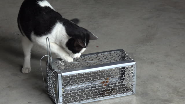 Cat playing mousetrap