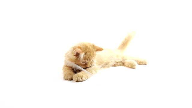 Cat playing with usb cable