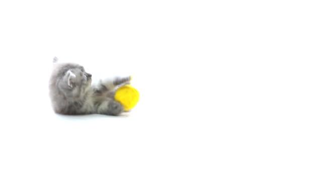 Katze spielen Wolle