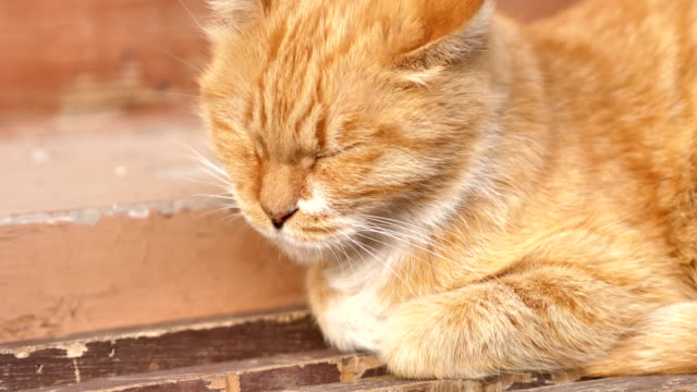 A cat rest at Wudaoying Hutong on Oct 20 2017 in Beijing China Hutong is a type of narrow streets or alleys commonly associated with northern Chinese...