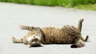 Katze (Kätzchen) Rollen auf Straße bei Sonnenuntergang