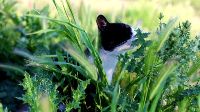 Cat rub up itself against green plant, smells and tastes it