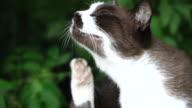 Katze kratzen Kopf langsame Bewegung