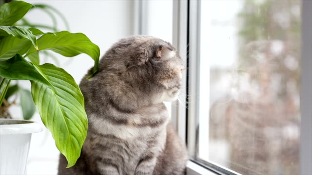 Cat sits on windowsill and looks out window.