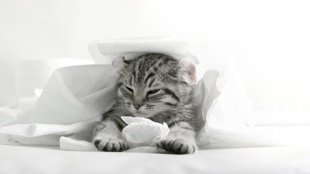 Katze und Schlafen