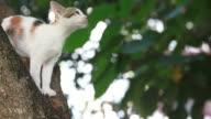 Cat Stuck in Tree, Pet Rescue