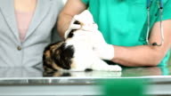 Cat treated by veterinarian