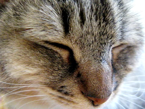 Katze (PAL