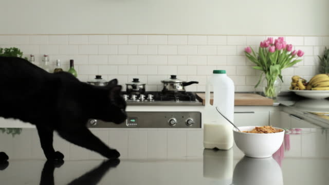 Cat walking along counter and sniffing bowl of cereal