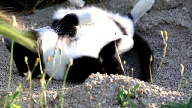 Cat wallowing