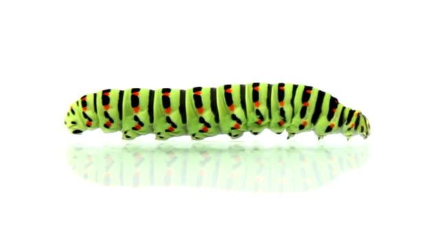 Caterpillar crawling, loopable