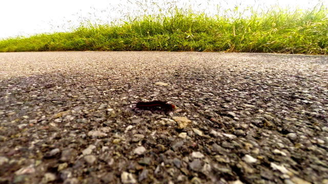 Caterpillar on the road
