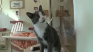 WGN Cats and Kittens At the PAWS medical center in the Little Village neighborhood in Chicago on July 29 2015