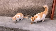 cats eat cat food outdoors