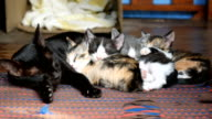 Cat's family is sleeping