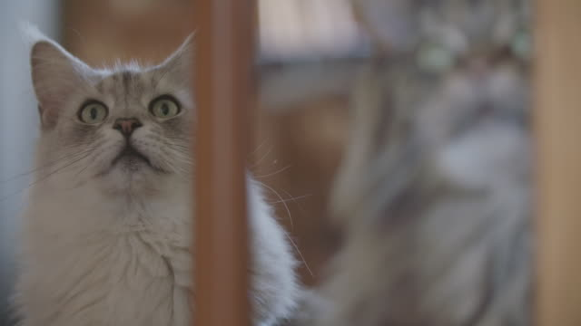 Cats looking out a window