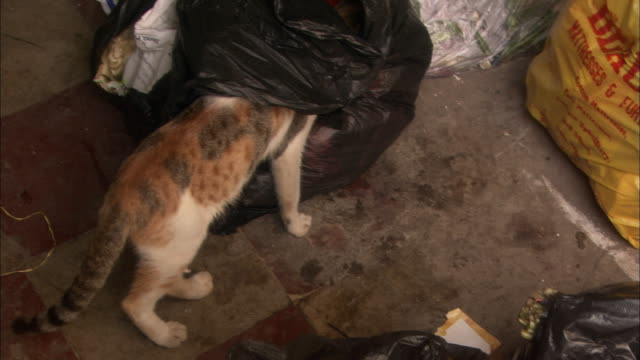 Cats rummage through bags of rubbish Available in HD.