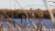 Cattails and tall grass blow in the wind and sunlight glistens on the Platte River.