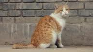 MS Cat/xian,shaanxi,China