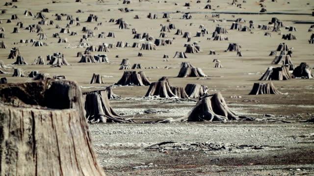 Cedar graves